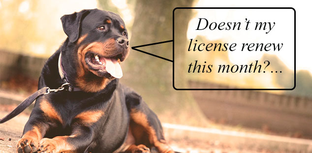 Dog License Renewals Are Due in June!